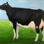 Een levensgrote koe geschilder op hout formaat 120x240cm. voor buiten aan de muur van een stal geschilderd met aclydverf.